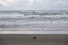 Praia de Ohope em Whakatane, Nova Zelândia fotografia de stock