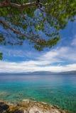 Praia de pedra com o mar claro do tourquise com o pinheiro na Croácia, Istria, Europa Foto de Stock Royalty Free