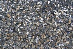 Praia de pedra dos escudos do sedimento Imagem de Stock Royalty Free