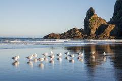 Praia de Piha, Auckland, Nova Zelândia imagem de stock royalty free
