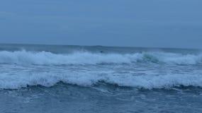Praia de Piha, Nova Zelândia Imagem de Stock