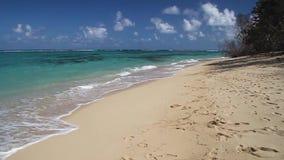 Praia de Playa Maguana video estoque