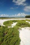 Praia de Tampa Fotos de Stock