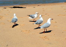Praia de Tathra fotografia de stock