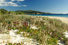 Praia de Tuerredda Fotografia de Stock Royalty Free