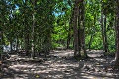Praia de Ubatuba Fotos de Stock Royalty Free