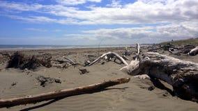 Praia de Waikanae, Nova Zelândia Imagem de Stock Royalty Free