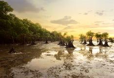 Praia de Walakiri, Sumba, Indonésia Imagens de Stock Royalty Free