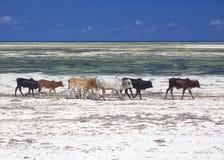 Praia de Zanzibar imagem de stock