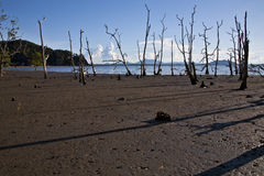 Praia delével da lama dos manguezais imediatamente antes do por do sol imagens de stock