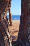 Praia distante atrás das árvores imagens de stock