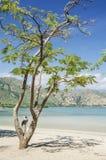 Praia do branca de Areia perto de dili Timor Oriental Imagens de Stock
