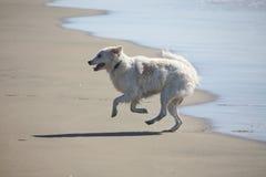 Praia do cão Fotos de Stock Royalty Free