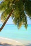 Praia do Cararibe tropical Imagens de Stock