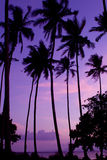 Praia do coco imagens de stock royalty free