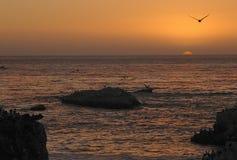 Praia do escudo Fotos de Stock