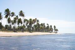 Praia do Forte σε Bahia, Βραζιλία στοκ εικόνα