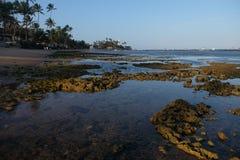Praia do Forte - Bahia, Brazil stock image