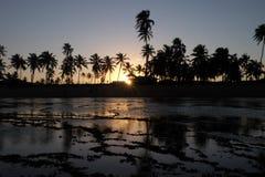 Praia do Forte - Bahia, Brazilië stock afbeeldingen