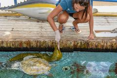 Woman who feeds moray and turtles on Project Tamar tank at Praia do Forte in Brazil royalty free stock images