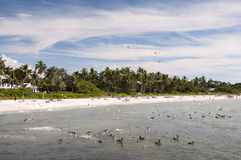 Praia do Golfo do México em Nápoles Fotografia de Stock Royalty Free