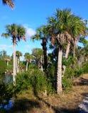 Praia do hernando de Florida: árvore Imagens de Stock Royalty Free