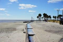 Praia do hernando de Florida: árvore fotos de stock