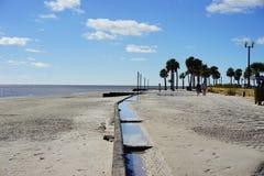 Praia do hernando de Florida: árvore Imagens de Stock