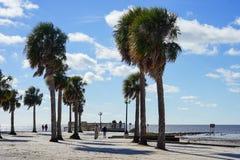 Praia do hernando de Florida: palmeira imagens de stock