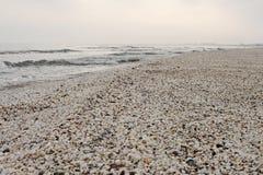 Praia do inverno dos shell no Mar Negro Imagem de Stock