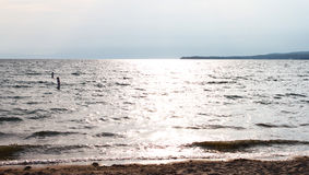 Praia do lago Imagens de Stock Royalty Free