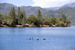 Praia do lago Whiskeytown Foto de Stock