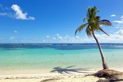 Praia do mar das caraíbas de Caravelle do La, ilha de Guadalupe fotos de stock royalty free
