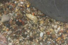 Praia do mar do eremita do caranguejo Imagens de Stock Royalty Free