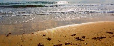 Praia do mar em um por do sol seaweed Alga ou alga na areia do c imagem de stock