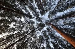 Praia do pinheiro em Kelantan, Malásia fotografia de stock royalty free