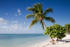 Praia do sombreiro nas chaves de Florida foto de stock royalty free