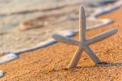 Praia do verão com estrela do mar Imagem de Stock Royalty Free