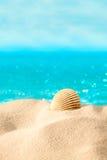 Shell na praia Imagem de Stock Royalty Free