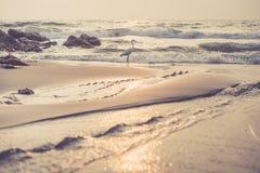 Praia do vintage com uma angra e uma garça-real Imagens de Stock Royalty Free