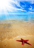 Praia dos Starfish Fotos de Stock