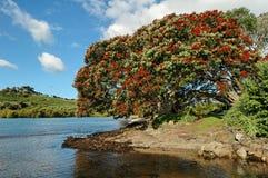 Praia dos tanoeiros Imagem de Stock Royalty Free