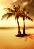 Praia dourada Imagens de Stock
