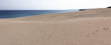 Praia dourada Imagem de Stock