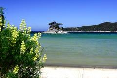 Praia dourada Abel tasman Fotos de Stock Royalty Free