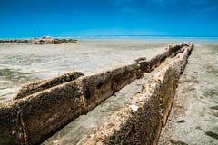 Praia e Barnacles Imagem de Stock Royalty Free
