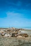Praia e Barnacles Fotografia de Stock Royalty Free