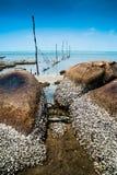 Praia e Barnacles Imagens de Stock