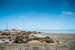 Praia e Barnacles Fotos de Stock Royalty Free