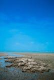 Praia e Barnacles Fotografia de Stock